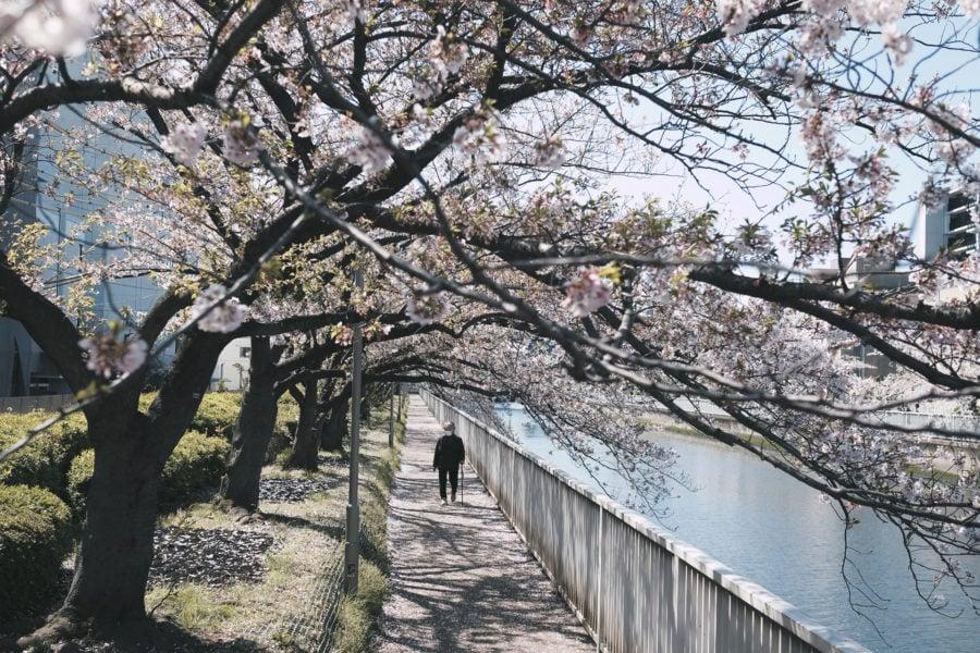 Elderly person walking along tree lined river in Japan